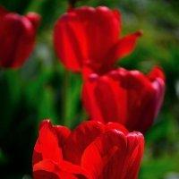 Городские цветы :: Гриша  6х9 или 9х12
