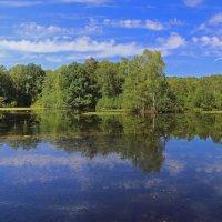 Лесное озеро :: Alexander Andronik