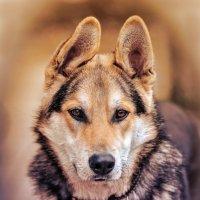 Собака Джек :: Николай Михайленко