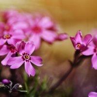 Маленькие цветочки :: Николай Михайленко
