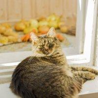 кошка :: Roman Demidov
