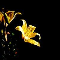 В них солнце золотое затаилось... :: Nina Streapan