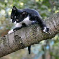 Любопытный котенок :: Nina Streapan