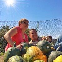 Урожай тыквы 2016 :: Владимир