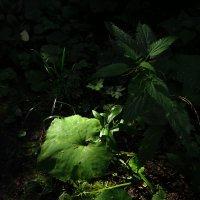 Еще свежая зелень :: Андрей Лукьянов