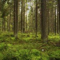 В лесу(вариант) :: Aнна Зарубина