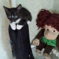 Я маленький котик, родился 7 июля, ищу хозяина, я воспитан и приучен! :: Ольга Кривых