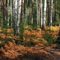 Грибные заповедные места... :: Лесо-Вед (Баранов)