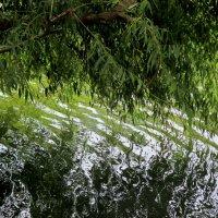 Река Темерник в парке Октября :: Нина Бутко