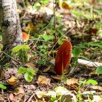В лесу :: Ольга Перевалова