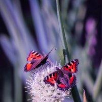 Две бабочки и одна мушка :: Надежда Чернецкая