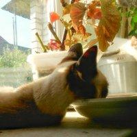 Спящие коты :: Сергей Дубовик