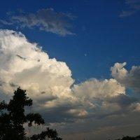 Вечернее небо или любование Луной... :: Светлана