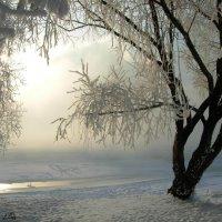 Утро 19_01_2010 в Коломенском :: Виталий Купченко