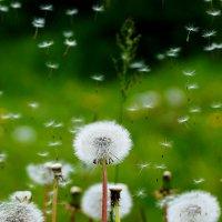 ожидание ветра :: Дмитрий Матвеев