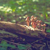 грибы :: Тася Тыжфотографиня