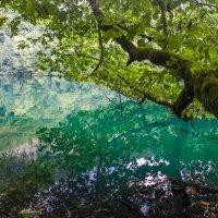IMG_5355-1 Голубое оз водоросли :: Олег Петрушин