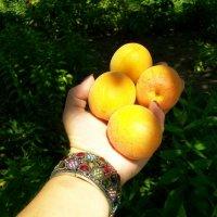 солнечные фрукты на ладони :: Галина Pavel