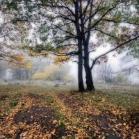 Осень. Утренний туман :: Дубовцев Евгений
