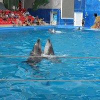 Дельфины танцуют :: Яна Чепик
