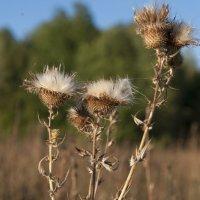 цветы :: Юрий Ивукин