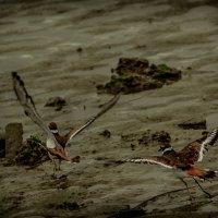 На юг, в тепло, из осенней грязи! :: Владимир Gorbunov