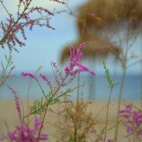 Цветы на пляже. :: Оля Богданович