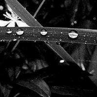 Еще не высох дождь вчерашний... :: tankist Алексей