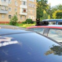 Местный обитатель двора :: Андрей Куприянов