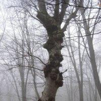 Дерево :: Виталий Купченко