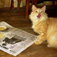 Вот теперь пообедаем! :: Валерий Толмачев