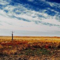 Сухое дерево в степи :: Валерий Подобный
