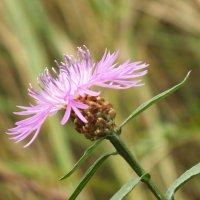 цветок :: prokyl