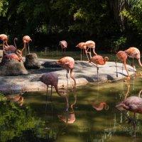 розовые птицы :: Vasiliy V. Rechevskiy