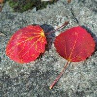 Осень в гости к нам идет! :: Swetlana V