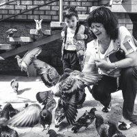 Беспощадное нападение голубей :: Я Сурико
