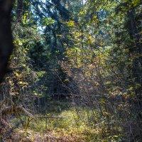 В лесу :: Алексей