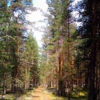 Последний день лета... :: Евгения Кирильченко