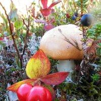 По грибы, по ягоды! :: Анна Приходько