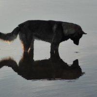 Смотрю в себя, как в зеркало :: Ирина Останина