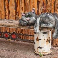 Кошки...кошки... :: Ирина Токарева