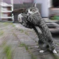 Молодецкие забавы кота Василия... :: Алёна Михеева