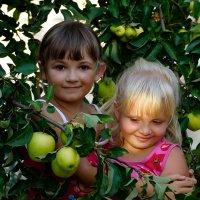 девочки с яблоками :: Наталия Сарана