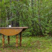 Стол в лесу. :: Андрей Шипицын