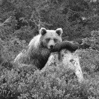 Грустно в лесу.. :: Олег Нигматуллин