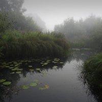 Утренний туман :: Александр Гурьянов