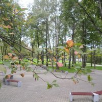 В парк пришла осень... :: BoxerMak Mak