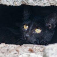 Черный кот :: Александр Вельц