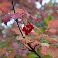 Осень в Сибири :: Тарун Дас