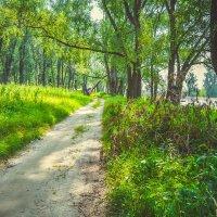 лесные тропы :: Света Кондрашова